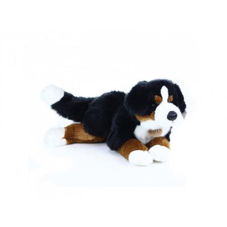 Bernský salašnický pes - ležící
